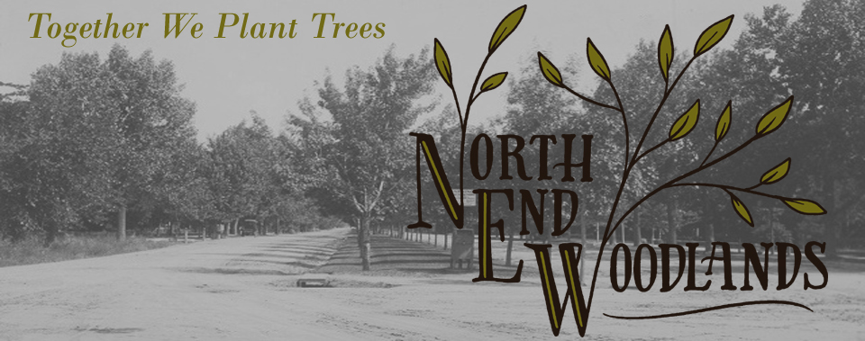 About North End Woodlands