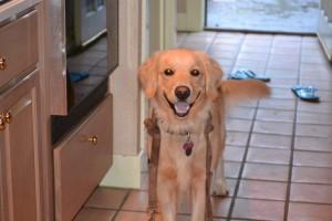 Daisy Picture